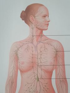 lymphatic pathways